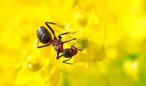 insektenschutzrollo